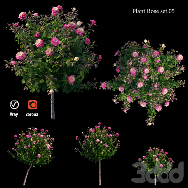 Plant rose set 05