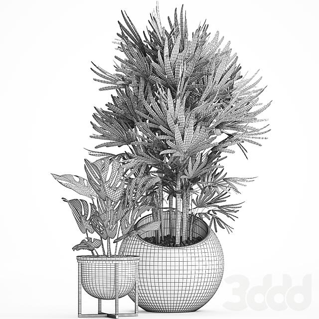 Коллекция растений 466.