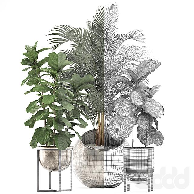 Коллекция растений 474.