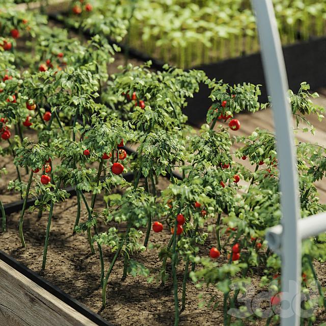 Greenhouses V1