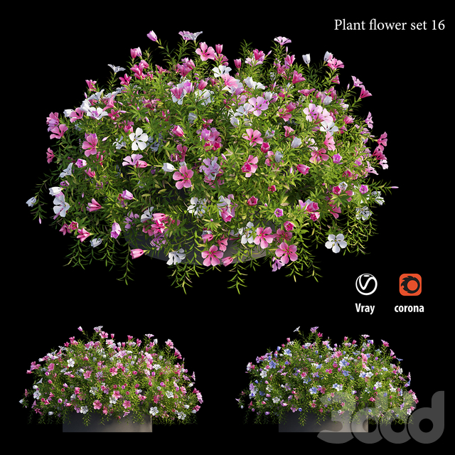 Plant Flower set 16