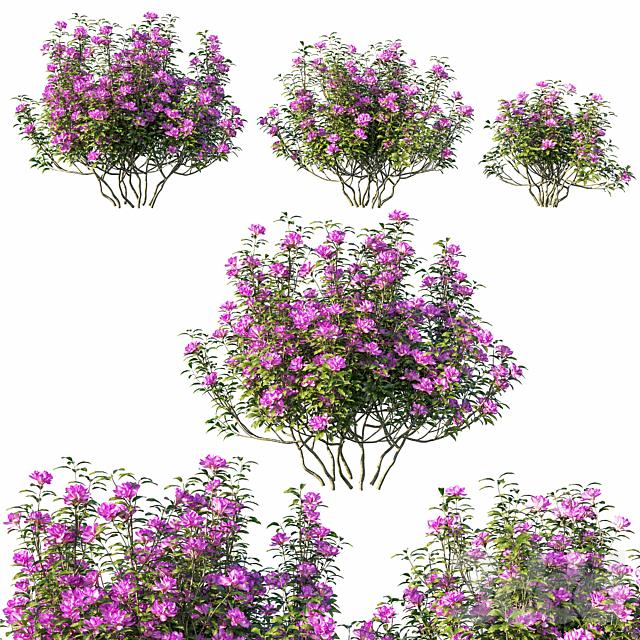 Rhododendron ponticum tree 02