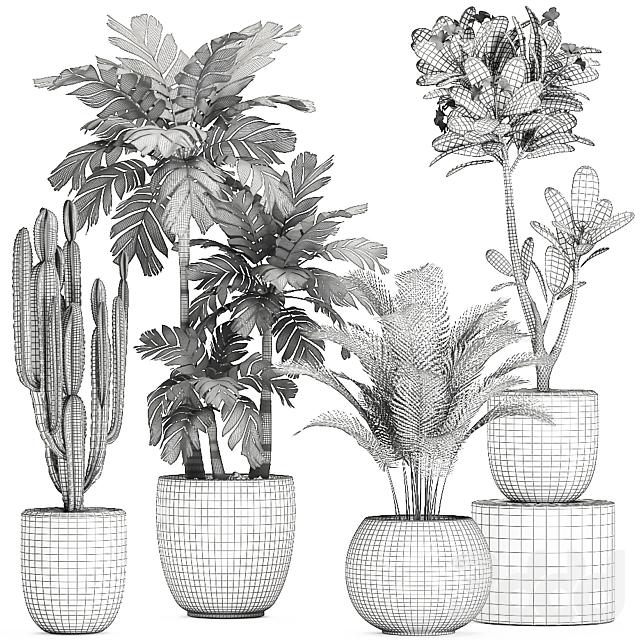 Коллекция растений 678.