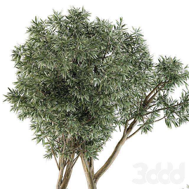 Outdoor Plants Tree in pot - Set 90