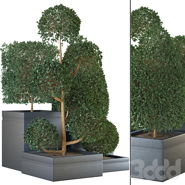 indoor plant vol 04