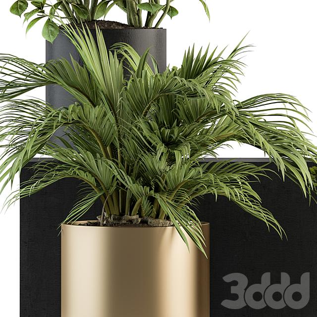 indoor Plant Set 233 - Plant Set in pot