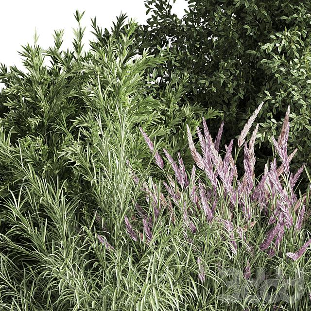 mixed_plant_and_bush_01